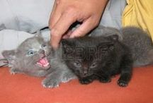 Kočky a koťata / Cats and kittens / Mňau! / Meow!