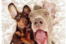 Cães | Amigáveis / O melhor amigo de todos