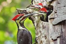 Birdies! / by Lisanne Amersfoort