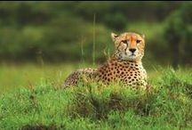 WildLife Safari / Love going on safari tours? Here are some interesting snaps of the wildlife.