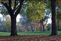 Monarch Park, Toronto, Ontario / From an ongoing study of a local city park, in a variety of seasons and lighting conditions, at different times of day.