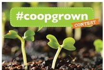 #coopgrown / Post your #coopgrown garden pictures here, so we can share how our Co-op seeds and starts are growing! Yay, Co-op gardens!  At the end of the gardening season will choose a winner at random--from all #coopgrown photos shared on Pinterest, Facebook, Twitter, and Instagram--to receive a $50 Co-op gift card.