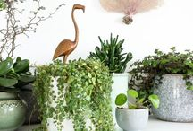 | Plants / Bring nature to your home, that's always the solution for a healthier and prettier home.