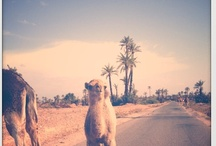 Around the palmeraie of Marrakech / What's happening around our palmgrove, garden, nature, ocher life everyday in a centenary palmeraie in Marrakech...