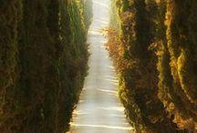 FRASES ESPAÑOL 1  / CITAS, REFLEXIONES...  / by Zoila Morales