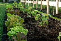 Grow Your Fruits and Veggies / Fruit and Vegetable Gardening