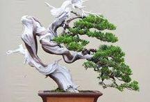 Ispirazione Bonsai / Bonsai Inspiration