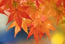 All things Autumn/Fall!
