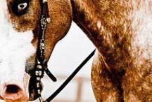Horses ♥♥♥ my love.