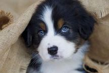 Beautiful Dogs / ...Dogs photographed beautifully / by Fun Dog Pics