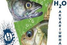 A Velencei-tó víz alatti élővilágának bemutatóháza
