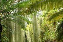 Verborgen stad, oerwoud, jungle ( voor school ) / jungle, oerwoud, maya's, inca's, eldorado, verborgen stad