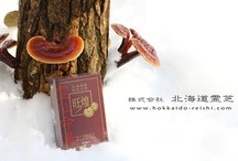 The best Ganogerma lucidum, reishi, lingzhi, 霊芝 / This is were the best stuff on Ganoderma Lucidum are gathered. 霊芝