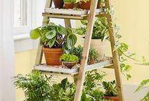 floweeers...plants...shelves