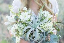 floral design   airplants