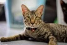 Here Kitty, Kitty, Kitty... / I love cats, kittens, wild domestic, big, small, I love them all!