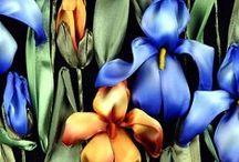 Splendides Iris
