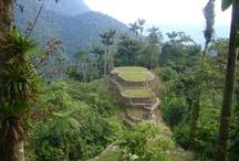 Ciudad Perdida - Cité Perdue - Lost City / Là-bas, au milieu d'une jungle tropicale et d'arbres de 40 à 50 mètres de haut se trouvent les ruines du grand empire Tayrona, qui se caractérisent par une parfaite intégration entre la nature et la civilisation, et par une merveilleuse architecture en pierre.