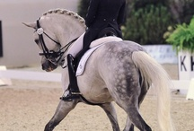 DRESSAGE / the elegant dancing with horses