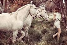HORSES IN FASHION