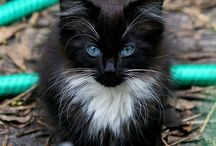 Cats / Black and White Cats!