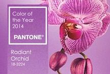 Pantone: colour of 2014 / Radiant Orchid