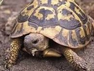 Tortues ♥ / keep calm and love turtles ❤