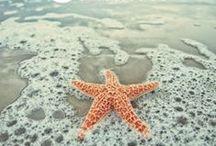 AQUAMARINE  / Surf, Sand and Sea