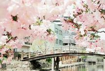 Ohaiyo Gozaimasu Japan / Capital City: Tokyo