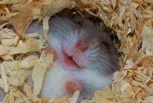 Muizen en hamsters