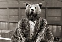 Bears / Bear Stuff.