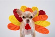 Tomlyn Pets Thanksgiving / Thanksgiving treats and costume ideas for your fur babies!