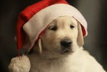 Tomlyn Pets Christmas / Christmas ideas and inspiration for Tomlyn Pets