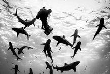 Life under the sea / Diving destinations, tips and inspiration for all adventures under the sea