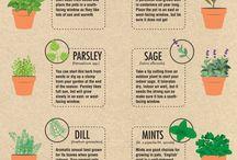 Herbs gardens