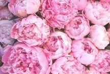 B L O O M S 〰️ / Flowers, flower arrangements, blooms, flower wall, peonies, peonies bouquet, flower crown