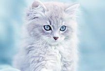 gatti e cani / Bellissimi i  gatti