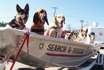 canine heroes / canine heroes...