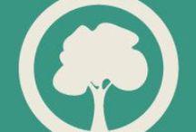 Des arbres par milliers / Il y a des milliers de façons de présenter son arbre généalogique. En voici quelques unes !