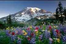 Wildflowers of the Treasure State / by Montana Fish, Wildlife & Parks