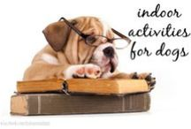 Activities For Dogs / Dog toys, activities, and toy boxes to keep your dog entertained.