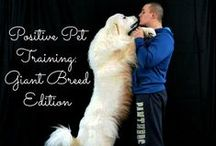 Dog Training / Tips and tricks for positive reinforcement training with your Great Pyrenees or giant breed dog.