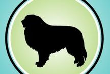It's Dog or Nothing / From training, to nutrition, to grooming, we offer all the information you need to live with a happy, healthy dog. Stay tuned for product reviews of the top, fluffy-approved dog brands.