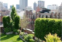 Beautiful terraces ...
