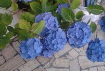 Idee giardino / #flower