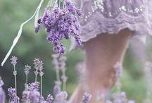 Photo _ Lavender
