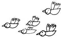 + birdy +
