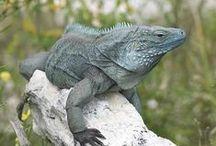 Birds, Reptiles & Small Mammals