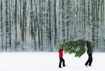 Winter & Holidays⛄️❄️ / by Diane Sarka