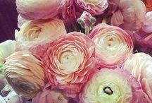 Flowers / by Diane Sarka
